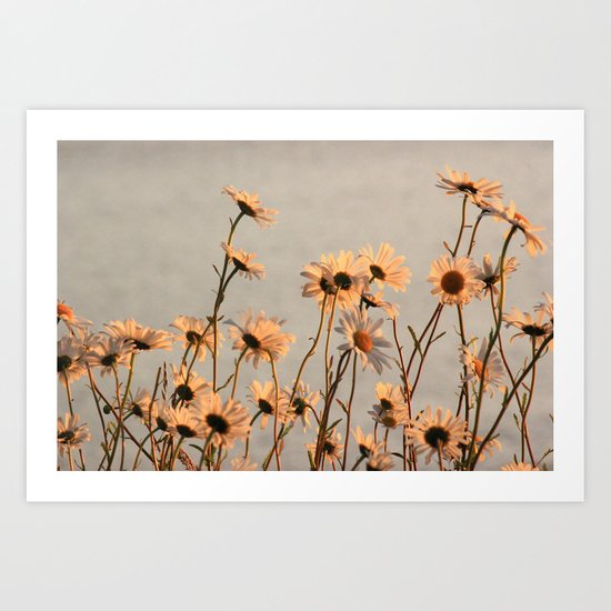 Daisies of the river bank Art Print