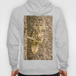 Perched Tawny Owl Hoody
