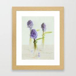 blue Hyacinthus Framed Art Print