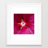 hibiscus Framed Art Prints featuring Hibiscus by Christina Rollo