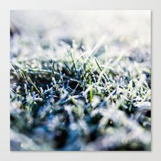 Frosty Morning 1 Canvas Print