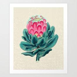 Protea flower garden Kunstdrucke