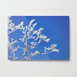 Frosted Branches Metal Print