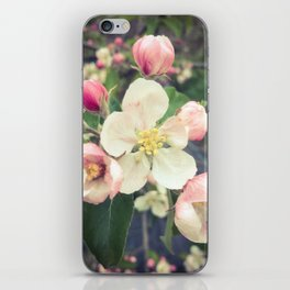 beautiful apple blossom iPhone Skin