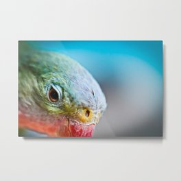 Colorful Parakeet Macro Metal Print