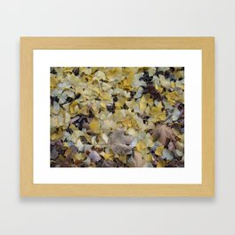 ginkgo gold Framed Art Print