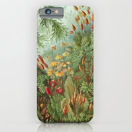 Scientific Illustration of Moss in the Forest -  Haeckel, 1904 iPhone Case