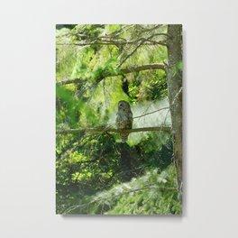 Owl Spirit In The Woods Metal Print