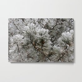 Frosty Pine Tree Metal Print