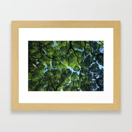 Crack willow ( salix fragilis ) crone. Framed Art Print
