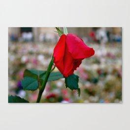 La Dernière Rose Canvas Print