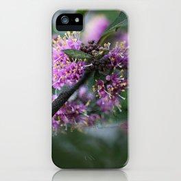 Callicarpa bodinieri blossoms iPhone Case