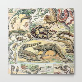 Reptiles by Adolphe Millot // XL 19th Century Snakes Lizards Alligators Science Textbook Artwork Metal Print