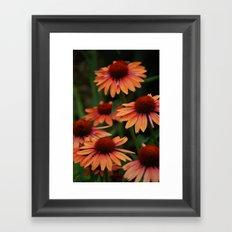 Orange Cone flowers Framed Art Print