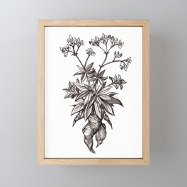 Mandragora Officinalis Framed Mini Art Print