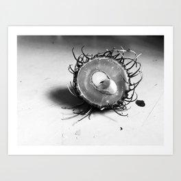 Rambutan Photography Art Print