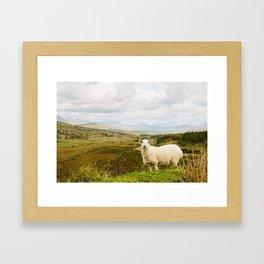 A sheep in the Irish hills Framed Art Print