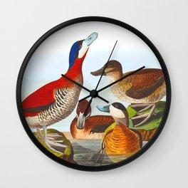 Ruddy Duck Wall Clock