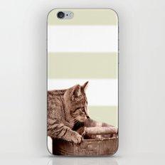 Cat Play iPhone & iPod Skin