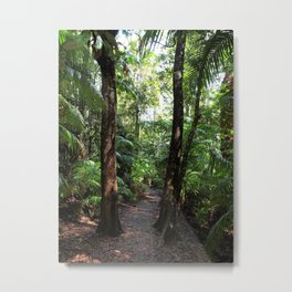 Rainforest Track Metal Print