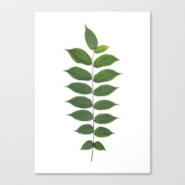 Green Leaf Botanical Print Canvas Print