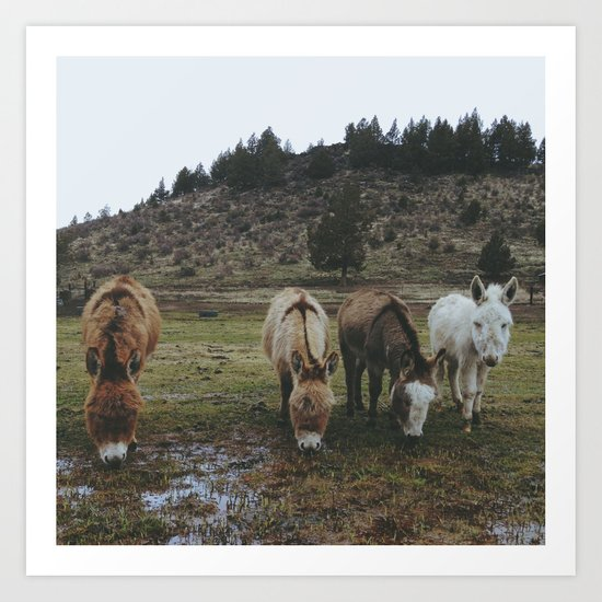 Miniature Donkeys Art Print