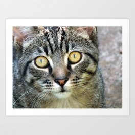 Eyes of a Tabby Cat Art Print