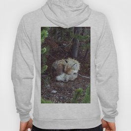Sleeping Fox Hoody
