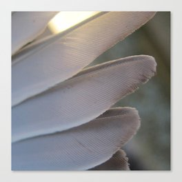 Feathers Canvas Print