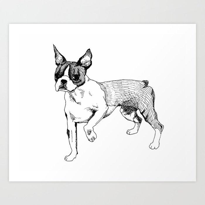 Medium Terrier Mix