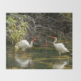 Ibis Dating Place Throw Blanket