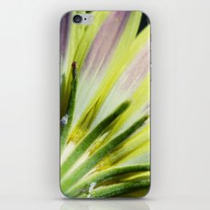 Intricate iPhone & iPod Skin