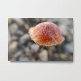 Tiny orange mushroom 2 Metal Print