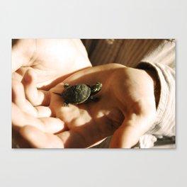 Lil' Turtle Canvas Print