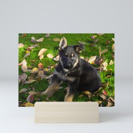 Little German Shepherd puppy Mini Art Print