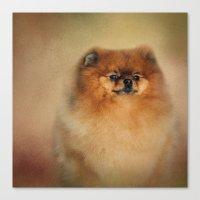 pomeranian Canvas Prints featuring Proud Pomeranian by Jai Johnson