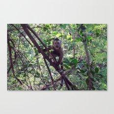 Monkey Sanctuary – Monkey with attitude Canvas Print