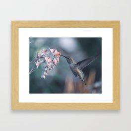 Female Anna's Hummingbird Framed Art Print