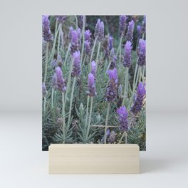Lavanda morningg Mini Art Print
