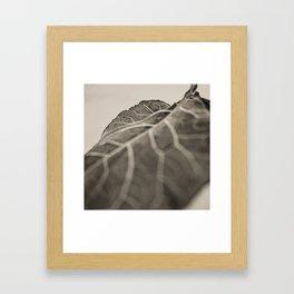 The Collard, Green Framed Art Print