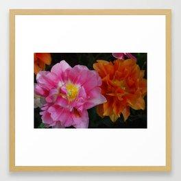 Pinkorange Framed Art Print