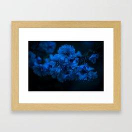 Cherry blossom blues Framed Art Print