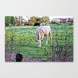 I See Cows Canvas Print