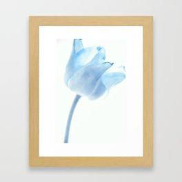 tulip series II Framed Art Print