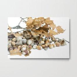 Autumn Acorns 5 Metal Print
