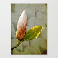 magnolia Canvas Prints featuring Magnolia by LoRo  Art & Pictures