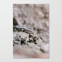 Lizards in the Mallee (1 of 2) Canvas Print