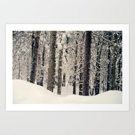 Winter Woods 1 Art Print