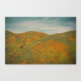 California Poppies 033 Canvas Print