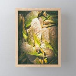 Samara maple tree dried fruit close-up in dark forest seed in spring season Framed Mini Art Print